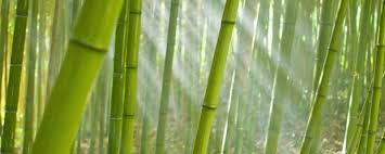 دریافت پاورپوینت بررسی تثبیت و تورم خاک رس توسط گیاه بامبو