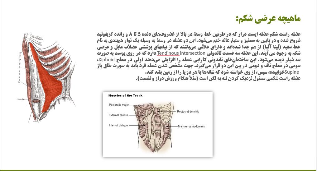دریافت پاورپوینت تمرینات ثبات مرکزی بر انعطاف پذیری و ساختار عضلات شکمی