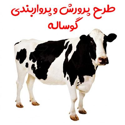 دریافت طرح پرورش و پرواربندی گوساله