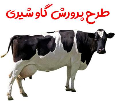 دریافت طرح پرورش گاو شیری